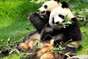 Peking-Zoo-6521028